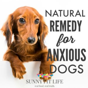 Calm Anxious Dogs: Natural Remedy to Calm Your Stressed Dog